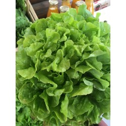 Salade Feuille de Chêne BIO (à la pièce)
