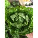 Salade Petite Rougette BIO (à la pièce)