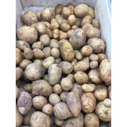 Pommes de terre nouvelles BIO (au 500g)