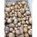 Pommes de terre nouvelles BIO (au kg)