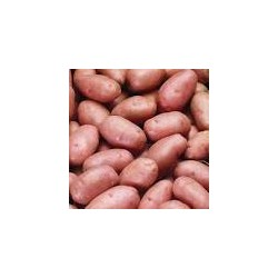 Pommes de terre Rouge (au kg)
