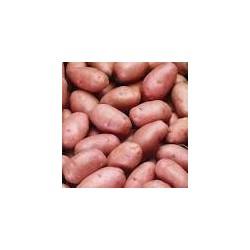 Pommes de terre Rouge Naturdis(au kg)