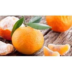 Mandarines BIO (au kg)
