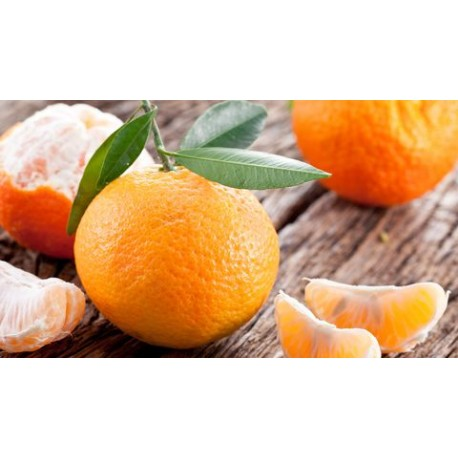 Mandarines (au kg) PRE-COMMANDE