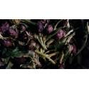 Petit Artichaut violet Mandelieu BIO (à la pièce)