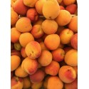 Abricots Bio  (au 500g)