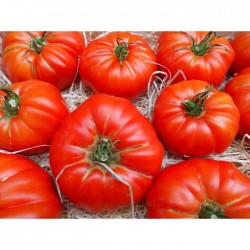 Tomates Marmande BIO (au kg)