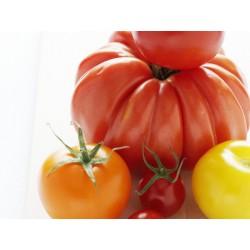 Tomate Ananas  BIO  (au Kg)