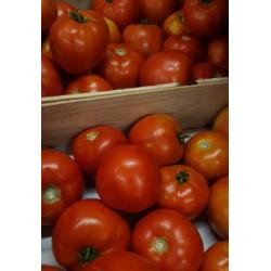 Tomates rondes BIO de Grasse au kg