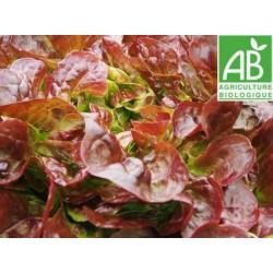 Salade Feuille de Chêne rouge BIO pièce