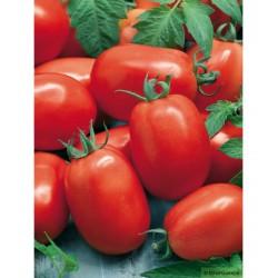 Tomates Roma Bio pour coulis (calibre, défauts...) au KG- Echange Paysans