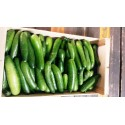 Petit Concombre libanais Tanneron AR (par 100g)