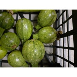 Courgettes rondes Agric R (au 500 g)
