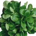 Salade Mâche Agric R (au 100g)