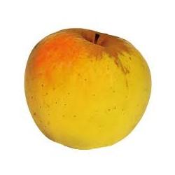 Pommes Opale Bio du Piémont au Kg