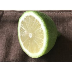 Citrons BIO (au 500g)