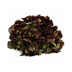 Salade Feuille de chêne rouge Agric Raisonnée (à la pièce)