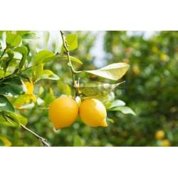 Citron Bio à l'hectogramme