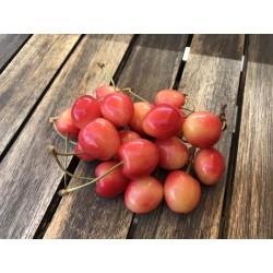 Cerises blanches BIO (au kg)