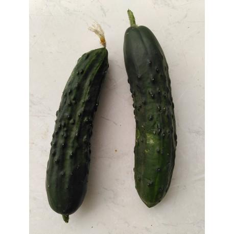 Concombre Noa . AR (au 500g)