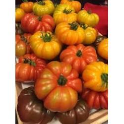 Tomates  Mélange de variétés au KG AR Tanneron