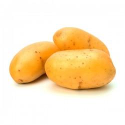 Pommes de terre Taisiya bio France (au kg)