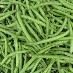 haricots verts bio (au100g)