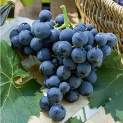 Raisin noir muscat France bio 500  gr