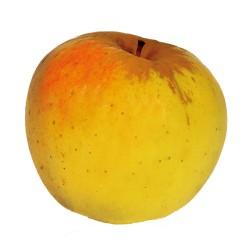 Pomme Cromson Crisp bBio au Kg