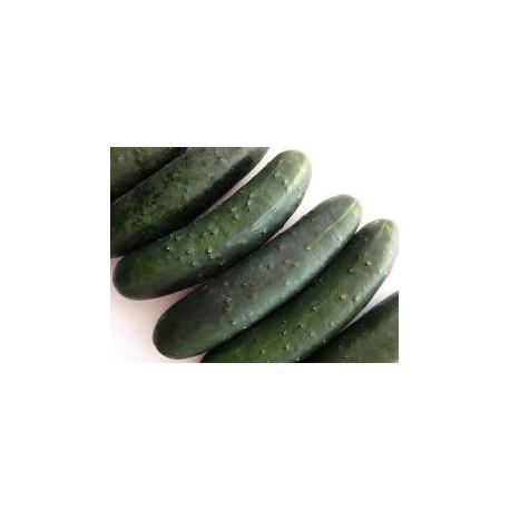 Concombre noir Bio à la pièce