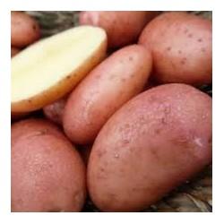 Pommes de terre Dalida rouges Bio