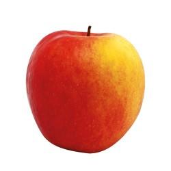 Pommes Crimson  légèrement grelées bio du Piemont