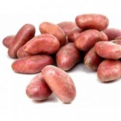 Pomme de terre conso rouge