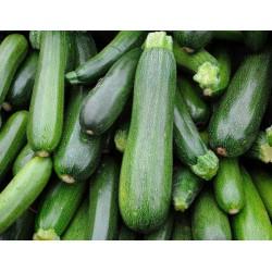 courgettes vertes AR (au 500g)