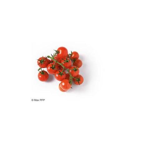 tomates cerises grappes bio d'Italie (aux 100g)