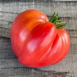 Tomates  Cœur de bœuf au KG AR Tanneron