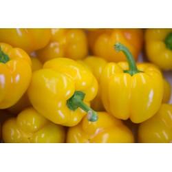 Poivrons jaunes Bio d'Italie (par 500g)