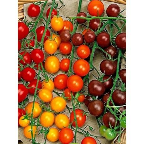 Tomates cerises rouges et jaunes -AR (barquettes de 300g)