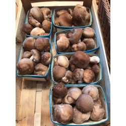 Champignons Shiitakes bio  de Grasse en barquette de 250g