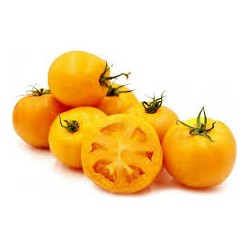 Tomates Jaunes au KG AR Tanneron