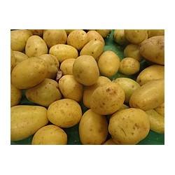 Pommes de terre Agata au Kg