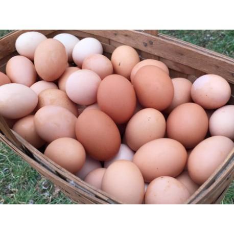 Oeufs en Vrac , labellisation Bio en cours ,vendus  par 6