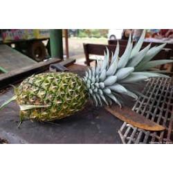 Ananas bio du Costa Rica