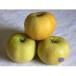 Pommes Chantecler BIO au Kg