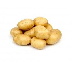 Pommes de terre CHARLOTTE BIO (au kg)