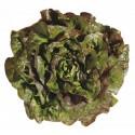 Salade Petite Rougette Mandelieu BIO