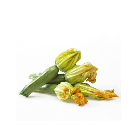 Courgettes fleurs BIO