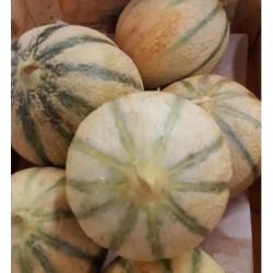 Melon BIO (à la pièce payé au Kg)