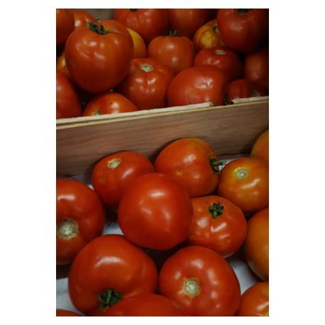 Tomates rondes BIO au kg
